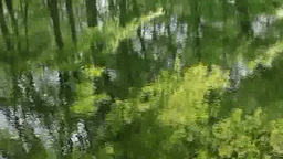 水面に映る新緑のブナ Footage