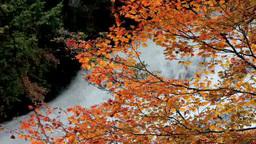 滝の紅葉 Footage