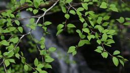 小滝と新緑 Footage
