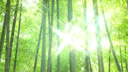 Bamboo forest and light Footage