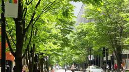 Marunouchi Nakadori street fresh greenery Footage