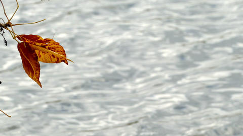 Autumn leaves on the background of the lake Footage