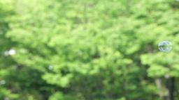 新緑の中のシャボン玉 Footage