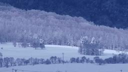 霧氷の林 Footage