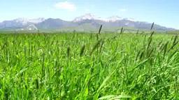 八ヶ岳高原の初夏 Footage