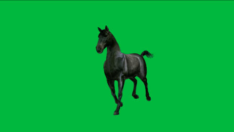 horse running with green screen Animation