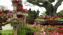 Beautiful Japanese Garden 01 Stock Video Footage