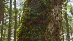 Moss on tree trunk Footage
