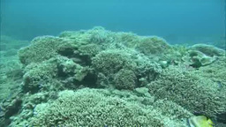様々な珊瑚礁と魚たち Footage