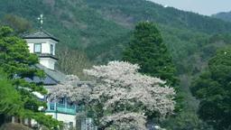 三代校舎ふれあいの里の桜吹雪 影片素材