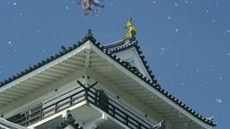 上山城の桜吹雪 影片素材