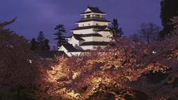 鶴ケ城(会津若松城)の夜桜 영상물