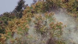 スギ花粉の飛散 Footage