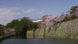 姫路城 お堀と桜 Footage