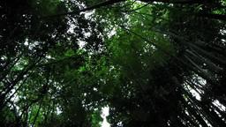 竹林のシルエット Footage