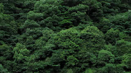 風に揺れる森 Footage