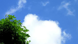 広葉樹と流れる雲 Footage