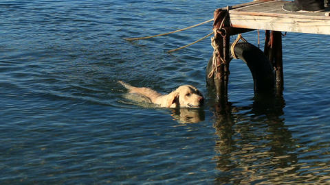Dog swims in the sea Footage
