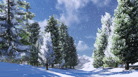 Snowy pine wood in the mountains at sunny day Footage