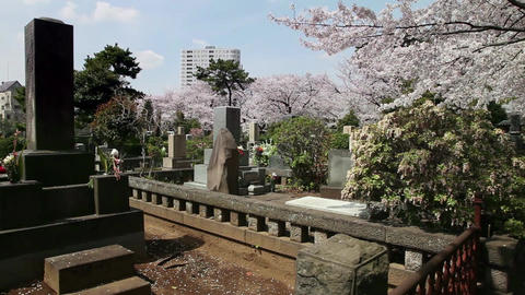 16of 23 Aoyama cemetery , graveyard , cherry blossom , trees , Tokyo , Japan , A Footage