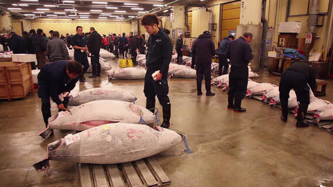 2of 23 Tuna auction , people , Tsukiji fish market , Tokyo , Japan , Asia Footage