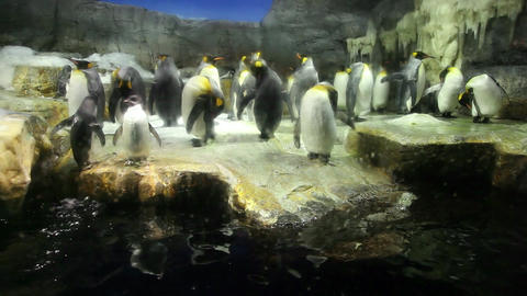 3of 10 Penguins swimming , animals , people at Osaka Aquarium , Japan , Asia Footage