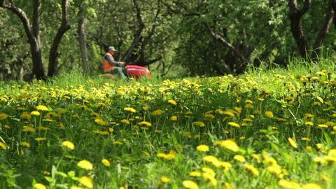garden work Stock Video Footage