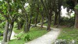 Japanese Garden 03 Footage