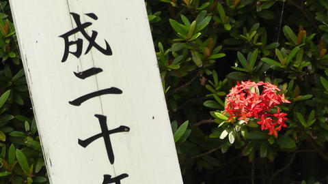 Japanese Text carved on a tree pole 01 Stock Video Footage