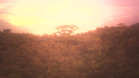 Lush Tropical Area stylized 01 heavenly Stock Video Footage