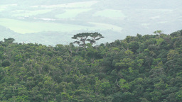 Lush Tropical Area Stock Video Footage