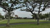 Park in Okinawa Islands 01 Footage
