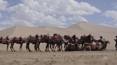 Camels In Desert Takla Makhan stock footage