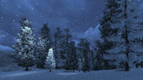 Snowbound pine forest at snowfall night Footage