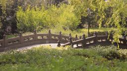 Shanghai Park Scene stock footage