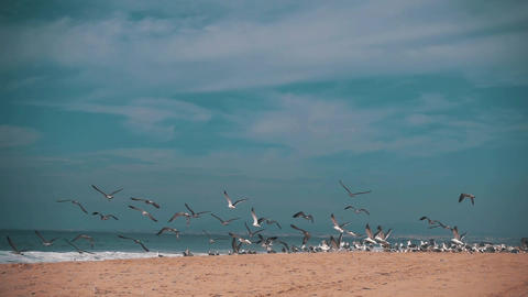 Seagulls Make Takeoff from the Ocean Beach Live Action