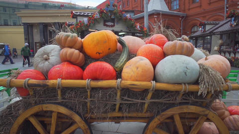Wagon With Pumpkins ,outdoor Decorations stock footage