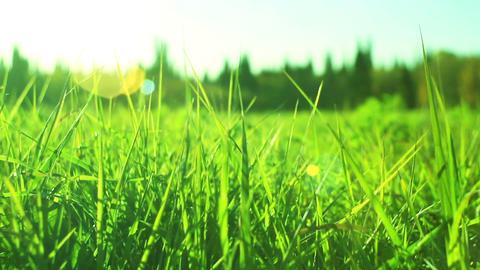 Green Grass Dolly In stock footage