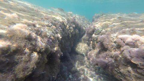 Rocky sea bed Footage