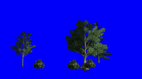 Wind Blown Trees (Blue Screen): Looping + Matte Animation