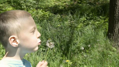 Boy blowing dandelion seeds Footage