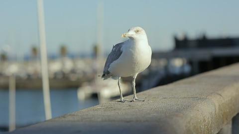 Sea Gull Starts Fly From Embankment Portugal Lisbon Rivera Ocean Marina stock footage