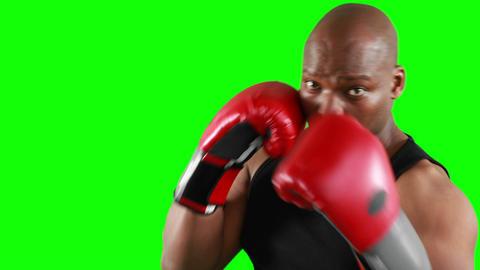 Serious muscular boxer man practising Footage