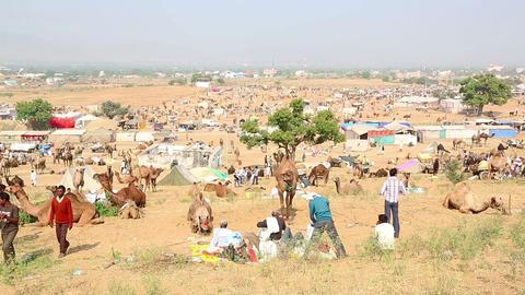 Pushkar Camel Fair Footage