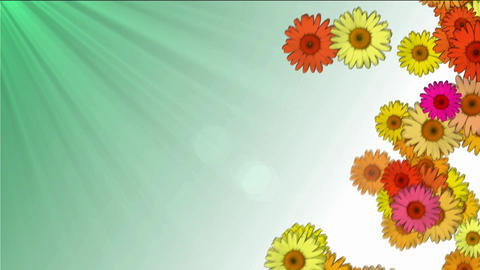 daisies falling on a green-white background Animation