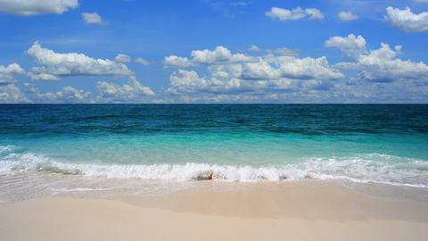 Tropical sea Live Action