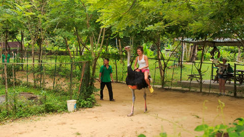 girl tourist rides on ostrich along path in tourist park Live Action