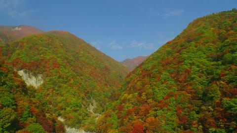 autumn color ライブ動画