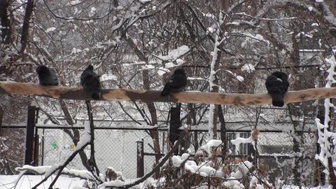 Birds Winter Background Video Footage