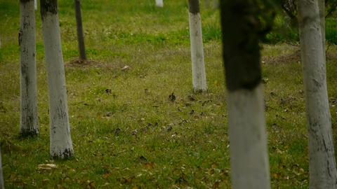group of sparrow eating seed in forest Stock Video Footage